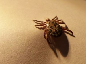 ticks-lyme-disease